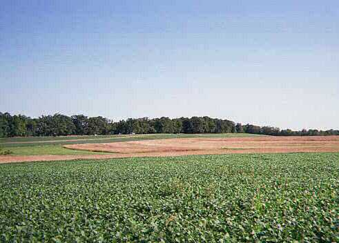 Across these fields, Pettigrew's Brigades advanced at  2:30PM